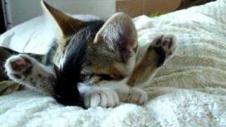 Diese Katze macht Yoga!