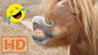 Lustige Tiervideos – extrem lustig zum Totlachen