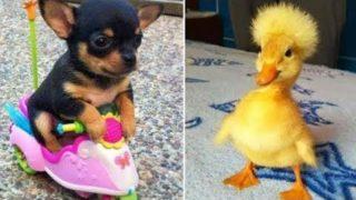 Lustige Tiere Videos Zum Totlachen Haustier 2020 #216