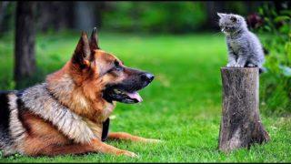 """Lustige Tiere10 Minuten in einem Atemzug zum Totlachen! Beste 😻 Katzen und 🐶 Hunde HD """"TikTak"""" 2021"""