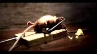 Only the strong survivor Käse werbung (die Maus überlebt und ist ANIMIERT)